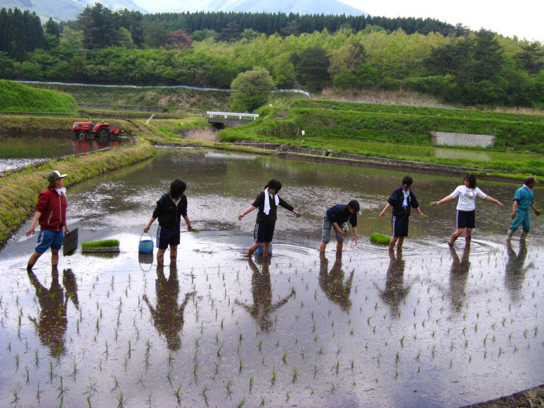 A Cheap Way to Visit Japan – WWOOF